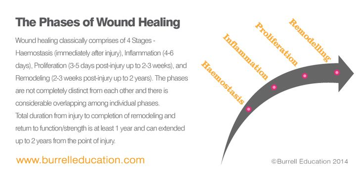 Phases of Wound Healing Post Natal